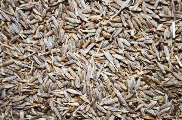 Cumin Seed Exporters Suppliers in India