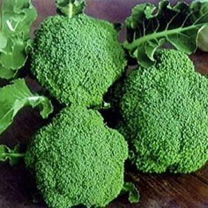 Broccoli Exporter in tamilnadu